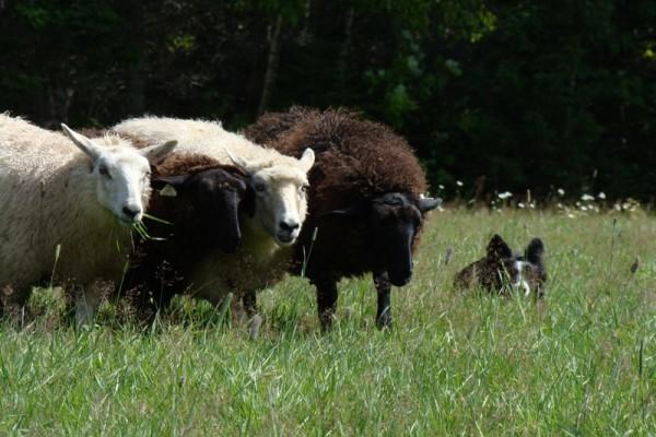 Pembroke Farm Sheep Shoppe