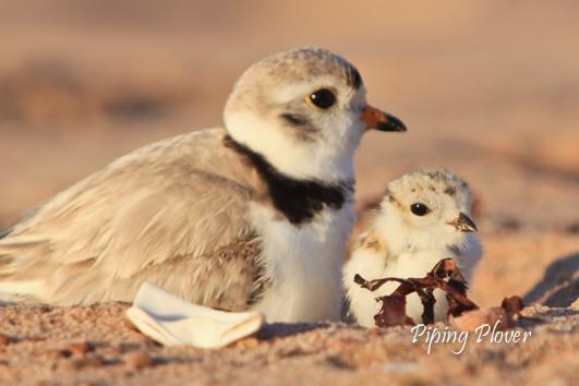 Forest & Stream Birding Tours