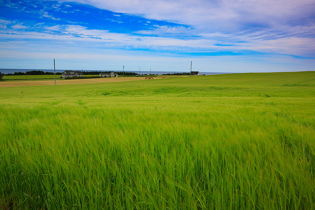 Dreamy Fields of PEI