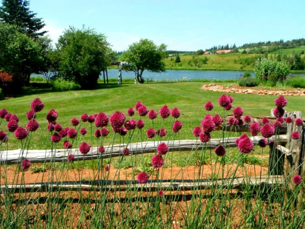prince edward island preserves company Things to do near prince edward island preserve company on tripadvisor: see 195 reviews and 795 candid photos of things to do near prince edward island preserve company in new glasgow.