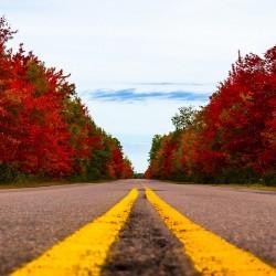 Wood Islands Road in Fall