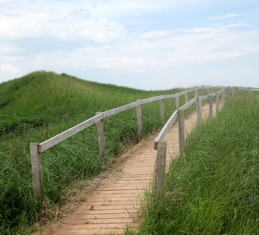 path to skinners beach_sm