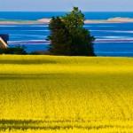 Summer in Prince Edward Island