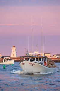 stephen desroches lobster setting day in north rustico 2015